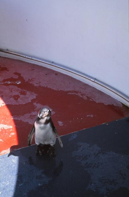 London Zoo Penguin Pool by Lubetkin, Drake + Tecton 12_Stephen Varady Photo ©