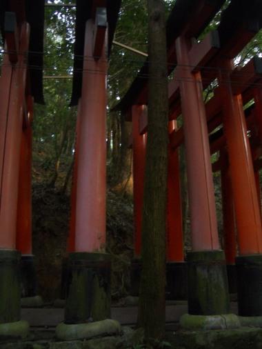 Fushimi Inari Taisha, Kyoto 39_Stephen Varady Photo ©